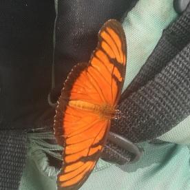 Le papillon qui nous suivait partout