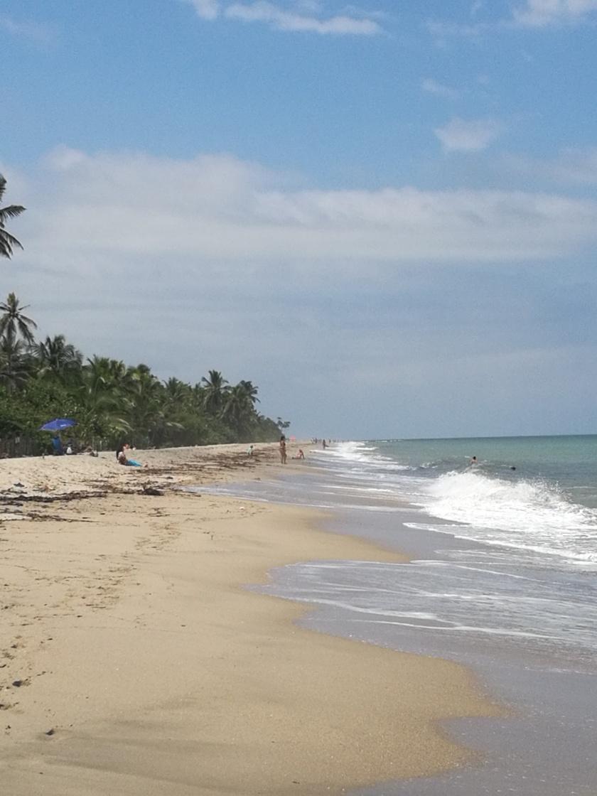 La plage : elle n'est pas sale, simplement des feuilles qui viennent du fleuve
